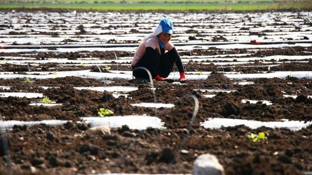 Mevsimlik tarım işçilerinin ortalama günlük ücretleri yüzde 12,6 arttı