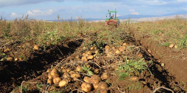 """Patateste """"sıfır gümrük vergisi"""" uygulaması uzatıldı"""