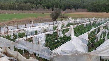 Tarım Sigortaları Havuzu'na hasar fazlası desteği