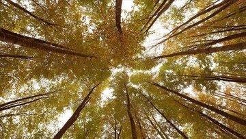 Fransa ile 150 milyon euroluk 'ormancılık' anlaşması