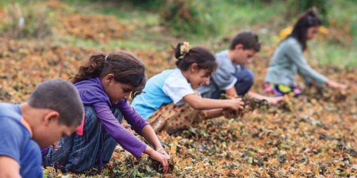 Dünyada 152 milyon çocuk işçi bulunuyor