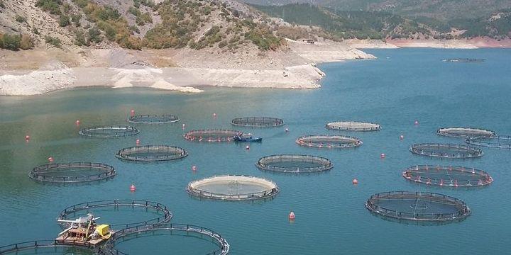 Su ürünleri ihracatı 582 milyon dolara ulaştı