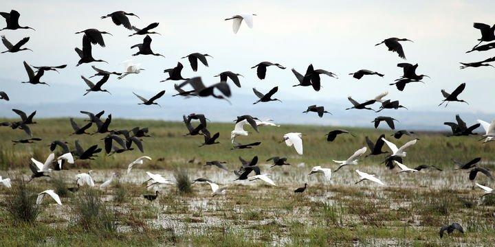 Yaban kuşlarını vuran kaçak avcıya 27 bin TL ceza