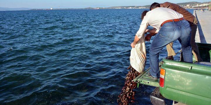 Deniz patlıcanı avlayan 2 kişiye 24 bin lira ceza