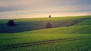 Tarım ÜFE Mayıs'ta azaldı