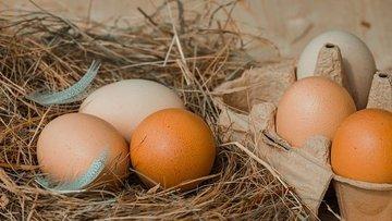 Mayıs'ta yumurta üretimi azaldı, tavuk eti üretimi arttı