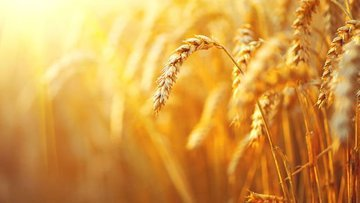 """""""Türkiye, buğdayda kurak seneler için hazırlık yapmalı"""""""