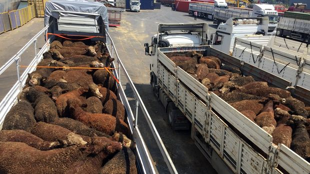 İspanya'dan Lübnan'a gitmesi planlanan hayvanlar Türkiye'den çıktı