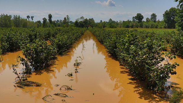 Çiftçiyi sel vurdu, zarar 250 milyon TL