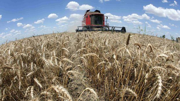 Küresel gıda fiyatlarında düşüş sürüyor