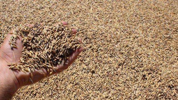 TMO, 200 bin ton yemlik arpa ithal edecek