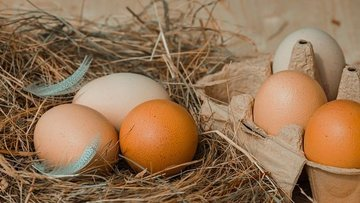 Temmuz'da yumurta ve tavuk eti üretimi arttı