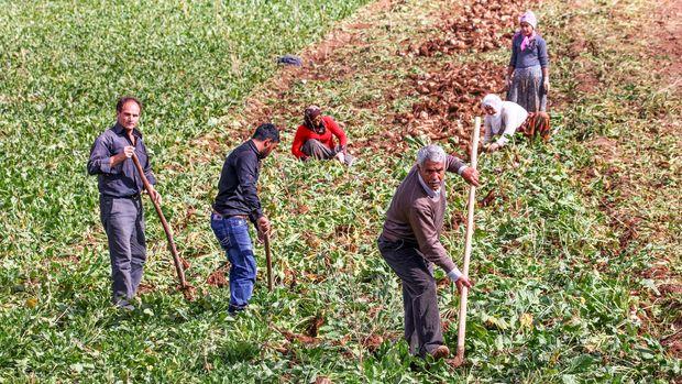 Tarım şurası sonuç bildirgesi, 21 Kasım'da açıklanacak