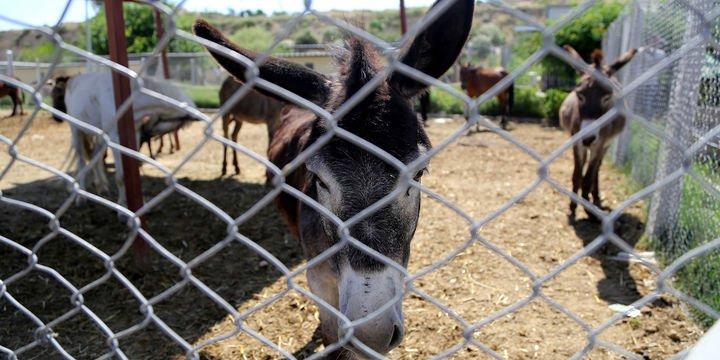 Tarım Bakanlığı tüketiciye at, eşek, domuz eti yediren firmaları açıkladı