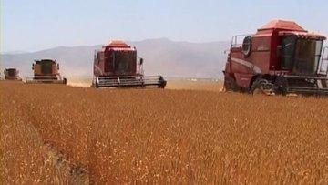 TMO buğday ve arpa satışlarına başlıyor