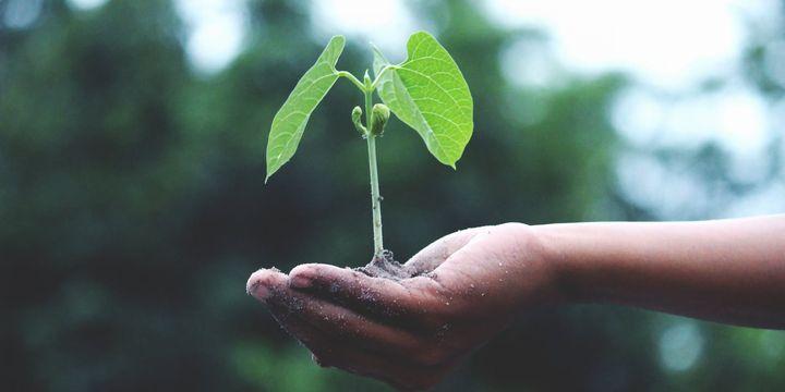 Bitkisel üretim desteklerinden yararlanma şartları belirlendi
