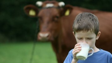 Süt üretiminde düşüş sürüyor