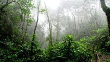 Amazon'daki ormansızlaşma 2008'den bu yana en yüksek sevi...