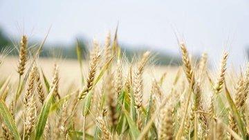 Tarıma dayalı yatırım projelerinin tamamlanma tarihi 28 Ş...