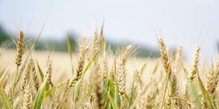 Tarıma dayalı yatırım projelerinin tamamlanma tarihi 28 Şubat 2020