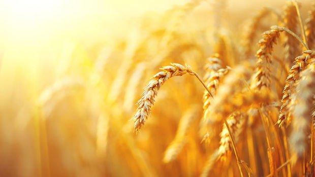 Almanak 2019: Tarım ve Gıda Sektörü