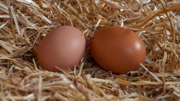 Tavuk yumurtası ve balıkta KDV indirildi