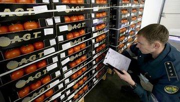 Rusya'ya gönderilen domatesler her an geri çevrilebilir