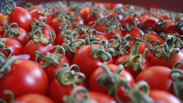 Rusya, domates kotasını 200 bin tona çıkarmaya hazırlanıyor