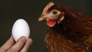 Tavuk eti üretimi azaldı, yumurta üretimi arttı