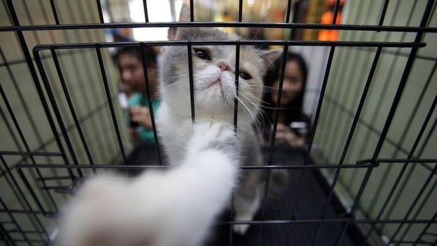 Şıncın Çin'de kedi köpek etini yasaklayan ilk şehir oldu