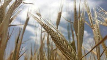 Mart ayı ihracatında tarım ürünlerinde artış, sanayide az...