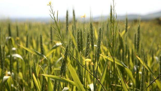 Tarım ürünleri ithalinde yetkili idareler düzenlendi