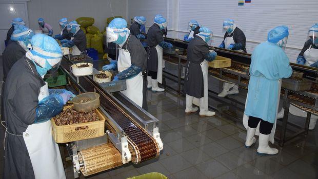 Türkiye'den dünyaya tereyağlı salyangoz ihracatı
