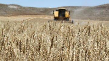 TÜİK: Bitkisel üretimde artış bekleniyor