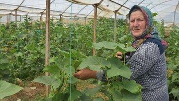 Çevresindekilere inat organik tarım yapan çiftin başarısı...