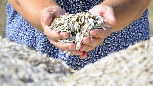 Çerezlik ayçiçeği ithalatında Toplu Konut Fonu artırıldı