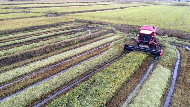 Tarım ÜFE Ağustos'ta aylık 0,22 yıllık yüzde 17,36 arttı