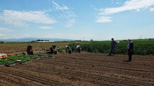 Hazine'ye ait tarım arazileri, topraksız ve yeterli toprağı olmayan çiftçilere kiralanacak
