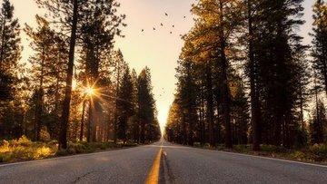 California, 2035'e kadar benzinli ve dizel araçları yasak...