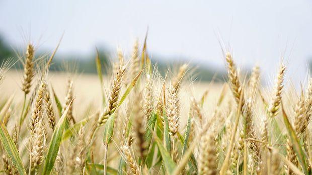 FAO: Küresel gıda fiyatları Eylül'de arttı