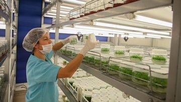 Biyoteknoloji girişimlerinin üçte biri tarıma odaklandı