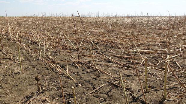 Suudi Arabistan, yeterli su olmadığı için Irak'taki tarım yatırımından vazgeçti