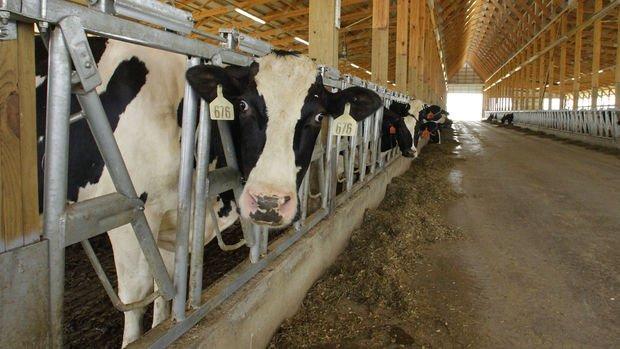 Gıda Komitesi çiğ süt tavsiye fiyatını belirledi