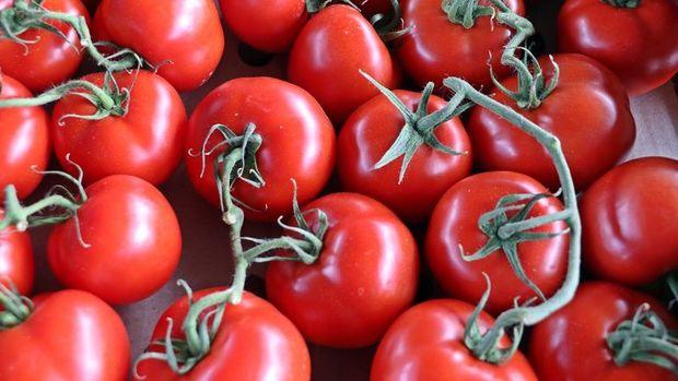 AK Parti/Uslu: Rusya'ya domates kotası yükseltildi