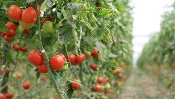 İngiltere ticaret anlaşmasında 550 milyon dolarlık tarım pastası