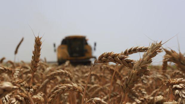 Ukrayna'nın buğday ihraç fiyatı 6 yılın zirvesine çıktı