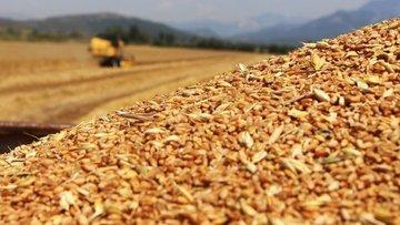 Rusya, tahıl ürünleri ihracatında vergileri artırıyor