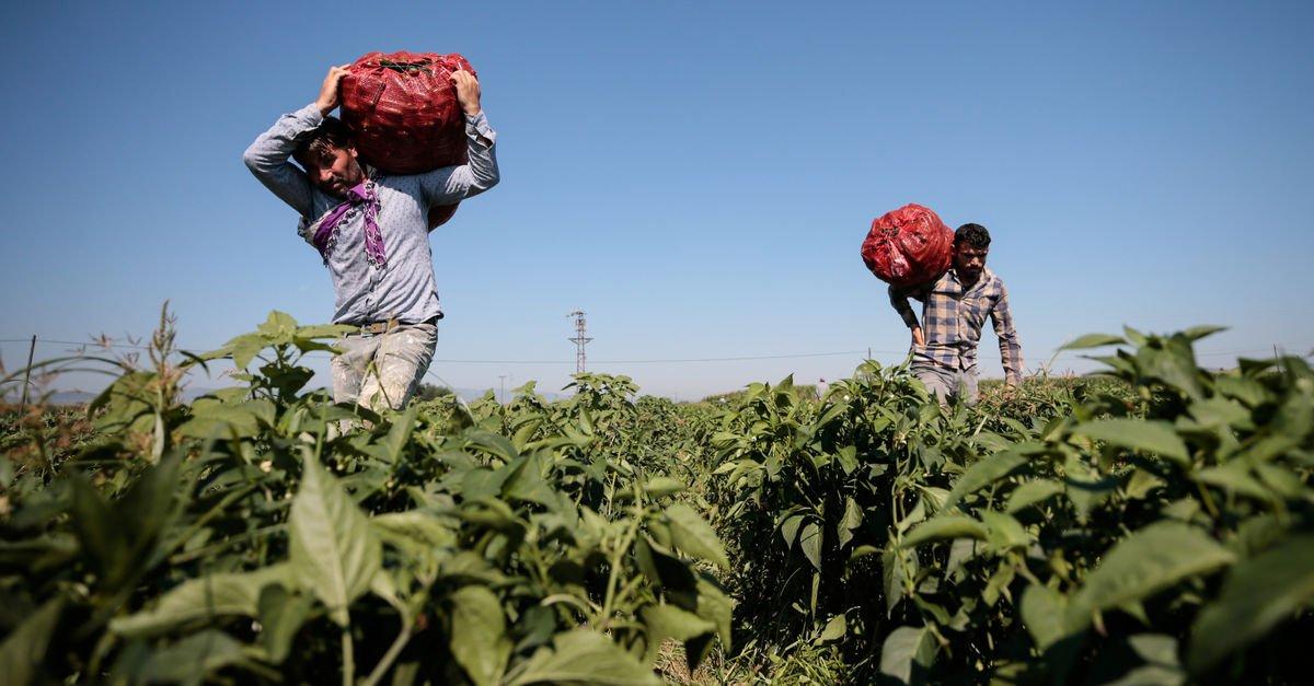 Sözleşmeli tarım modeli için 12 maddelik öneri