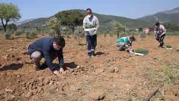 İzmir, tarımda yeni bir üretim ve pazarlama modeli oluştu...