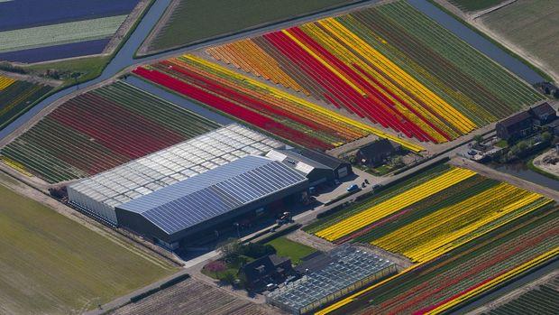 Hollanda'nın tarımsal ihracatı 116 milyar doları aşarak rekor kırdı